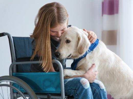 A young girl sits in a wheel chair in a room. She is hugging a yellow labrador (dog) who has climbed up on her lap with its front paws.